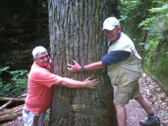 230 DISMAL TREE HUGGERS