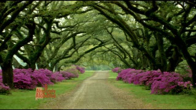 308 - azalea trail trees