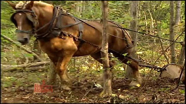 303 HORSE